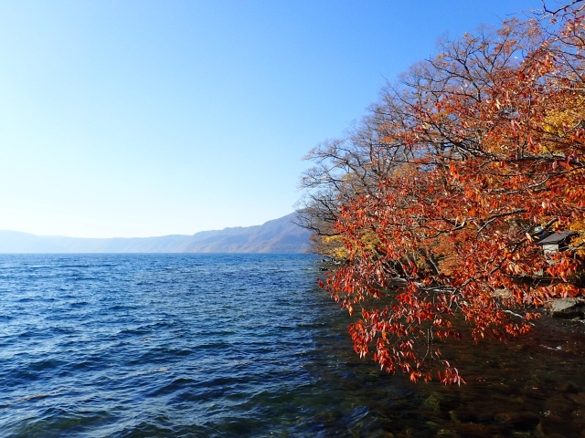 十和田湖 紅葉